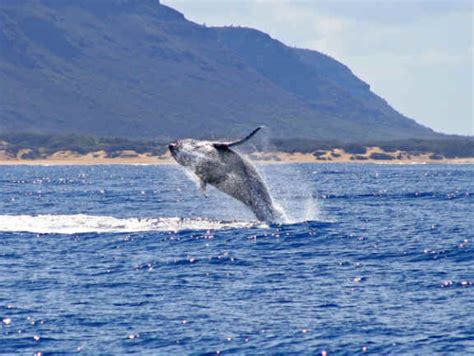 Catamaran Journey Hawaii by Na Pali Coast Morning Snorkel Dolphin Watch Cruise From
