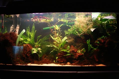 plantes sans sol nutritif aquariophilie org