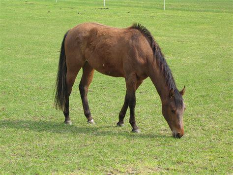 magenentzuendung und magengeschwuer beim pferd reiten