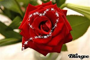 A Rose to say, I LOVE YOU Picture #103482269 | Blingee.com