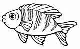 Fish Coloring Educative sketch template