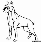 Boxer Dog Coloring Dogs Pages Trace Outline Sheets Adult Drawing Print Thecolor Printable Colors Clipart Template Books Templates sketch template