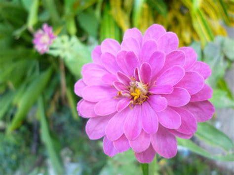 ดอกไม้...กับใจคน - เอื้องแสงฝาง - GotoKnow