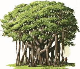 the best time to plant a tree was 20 years ago the second best time is now proverb