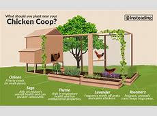 12 ChickenFriendly Plants To Grow Next To Coops • Insteading