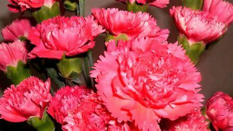 Flor Cravo Laranja   Flores - Cultura Mix