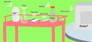 Biotechnology Web Lesson