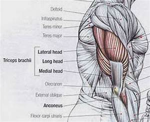 A Comprehensive Guide On How To Get Bigger Triceps