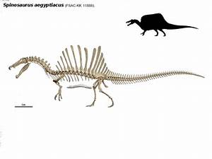 bipedal Spinosaurus by thedinorocker on DeviantArt