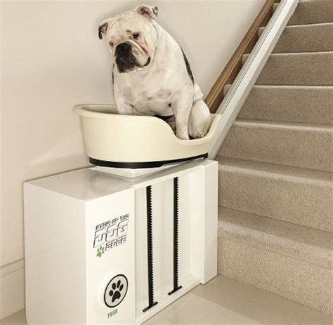 absurd canine stair lift lets plump pups rest their dogs