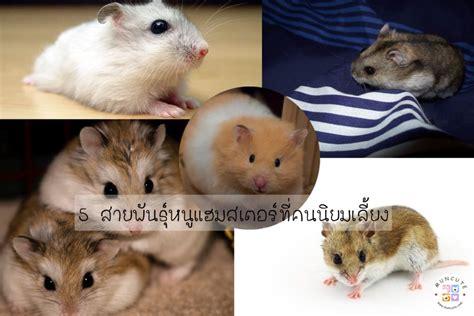 5 สายพันธุ์หนูแฮมสเตอร์ที่คนนิยมเลี้ยง l สัตว์โลกน่ารัก ...