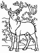 Coloring Pages Deer Hunting Elk Printable Bull Hunter Sheets Drawings Forest Animals Template Animal Sketch Books Clip Shark Popular sketch template