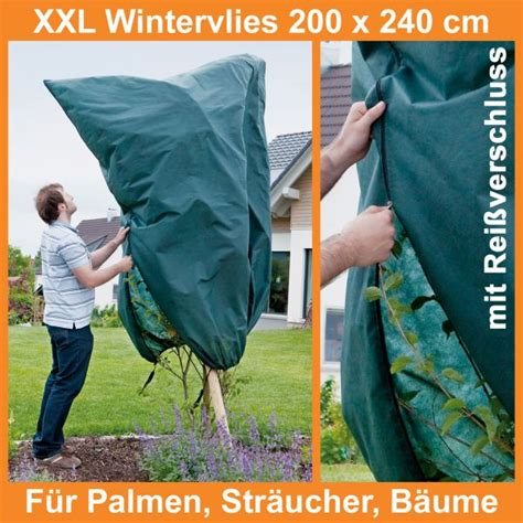 Garten Palme Winterfest Machen by Palmen Winterfest Machen Palmen Winterfest Machen Kleine