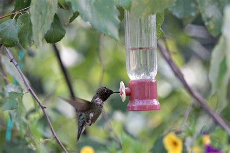 bees  hummingbird feeders  birds delight
