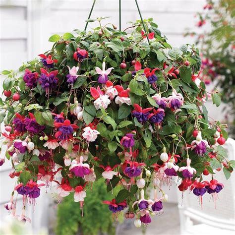 decorative boxes best plants for hanging baskets balcony garden web