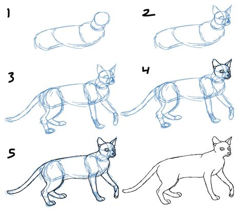 How To Draw A Cat  Dr Odd