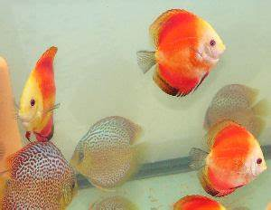 Welches Bett Ist Das Richtige Für Mich : welches aquarium ist das richtige f r mich ~ Michelbontemps.com Haus und Dekorationen