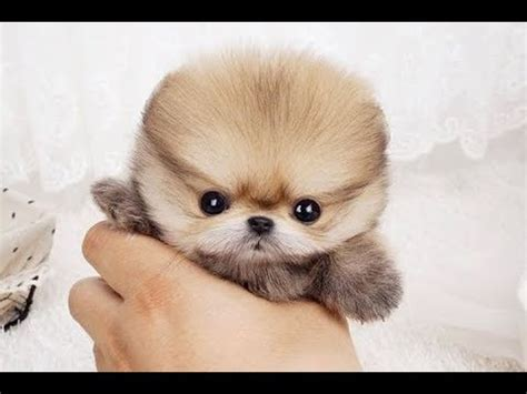 Top 10 Cutest Dogs In The World 2018 Youtube