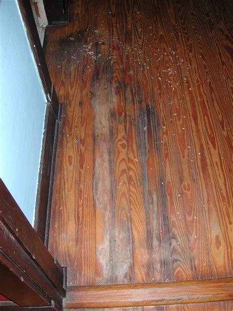 how to restore wood floor how to restore hardwood floors restorationmaster finder
