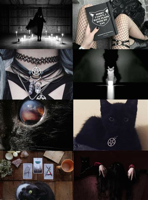 animal witch aesthetics cat witch requested bird