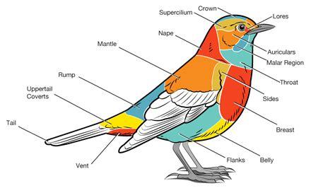 basic parts   bird bird academy  cornell lab