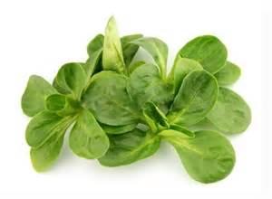 Bio Light by Baby Spinach
