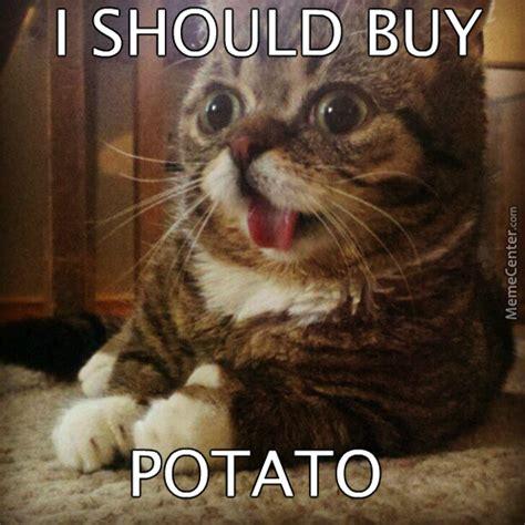 Rich Cat Meme - rich cat meme rich cat memes image memes at relatably rich cat memes image memes at relatably