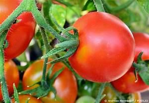 Gemüse Im Gewächshaus : gew chshaus selber bauen diese tipps sollten sie ~ Articles-book.com Haus und Dekorationen