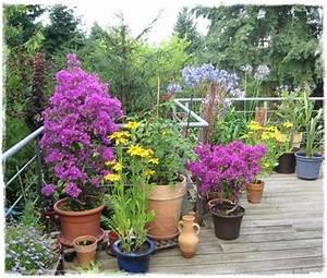 Kübelpflanzen Für Terrasse : online izleriz k belpflanzen f r den balkon ~ Lizthompson.info Haus und Dekorationen