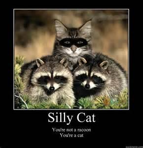 Motivational Cat Meme