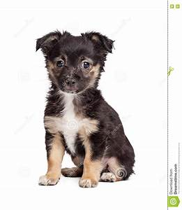 Black And Tan Terrier Puppy Dog Stock Image - Image: 71292637