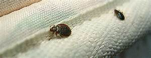 bed bugs control sydney bed bugs treatment bugs be gone With can we see bed bugs