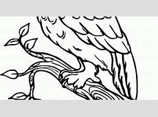 43 Koleksi Gambar Sketsa Burung Hantu Terbang Terbaru