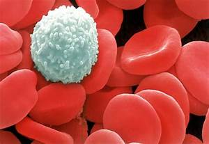White Blood cells vs. Red Blood cells - JAkers2nd2014