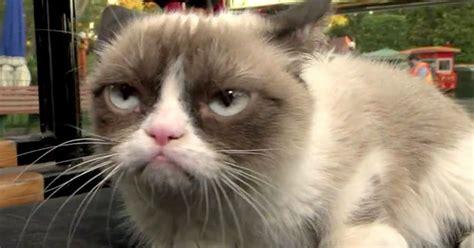 Video Grumpy Cat Meets Grumpy Dwarf At Disneyland In