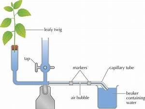 Mr Horrocks' Biology – 9. HL Plant Biology
