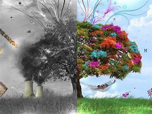 Nature Wallpapers: 3d Tree Wallpaper