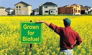 The Biofuel Quiz   HowStuffWorks