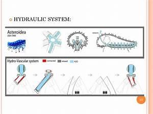 Pentaceros Starfish  Biodiversity  Animal Science  Zoology