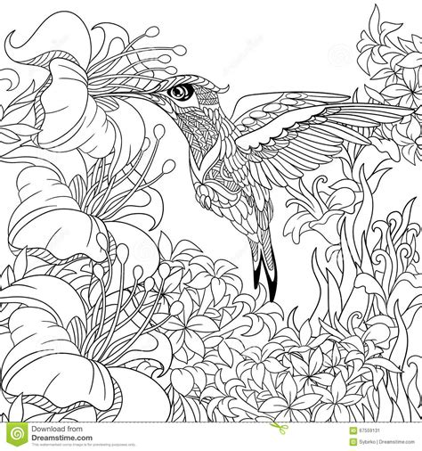 Adult Coloring Hummingbird Coloring Pages