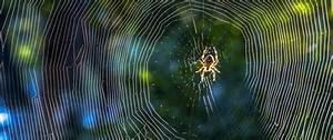 Se Débarrasser Des Araignées : comment se d barrasser des araign es la maison caa qu bec ~ Louise-bijoux.com Idées de Décoration