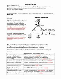 29 From Stem Cell To Any Cell Worksheet Answers