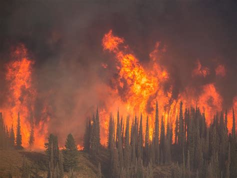 Forest Service official says fighting Lower 48 wildfires ...