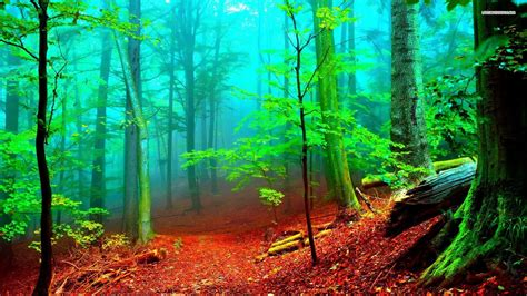 enchanted forest wallpapers  images