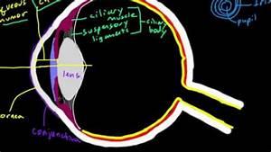 Eye Diagram Labeled Ap Psychology