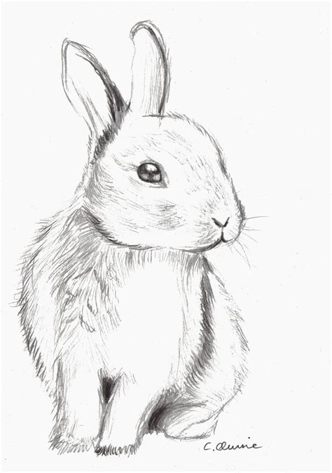 Rabbit Drawing Images For Gt Cute Bunny Drawing Tumblr Watercolor