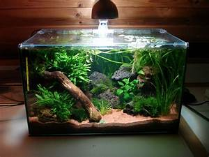 Aquarium Einrichten 60l : aquascaping galerie aquascaping forum aquascaping ~ Michelbontemps.com Haus und Dekorationen