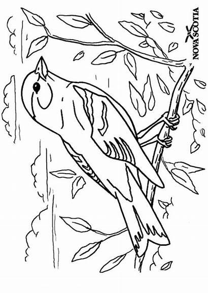 Kleurplaat Kleurplaten Vogels Oiseau Vogel Coloriage Goudvink