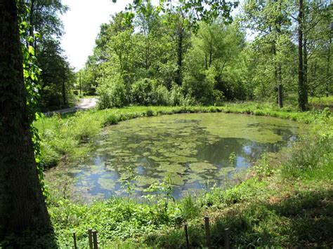 the farmer battles pond scum rural ramblings