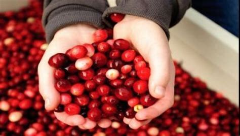 cranberry and chagne name cbc ca north by northwest thanksgiving and cranberries